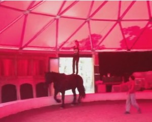 Equestrian Vaulting Training